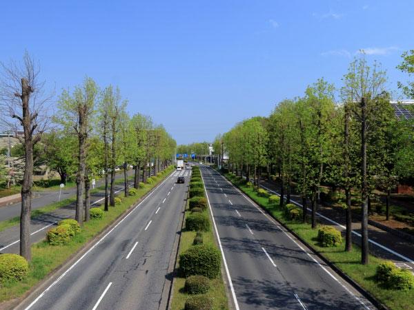 道路・街路樹